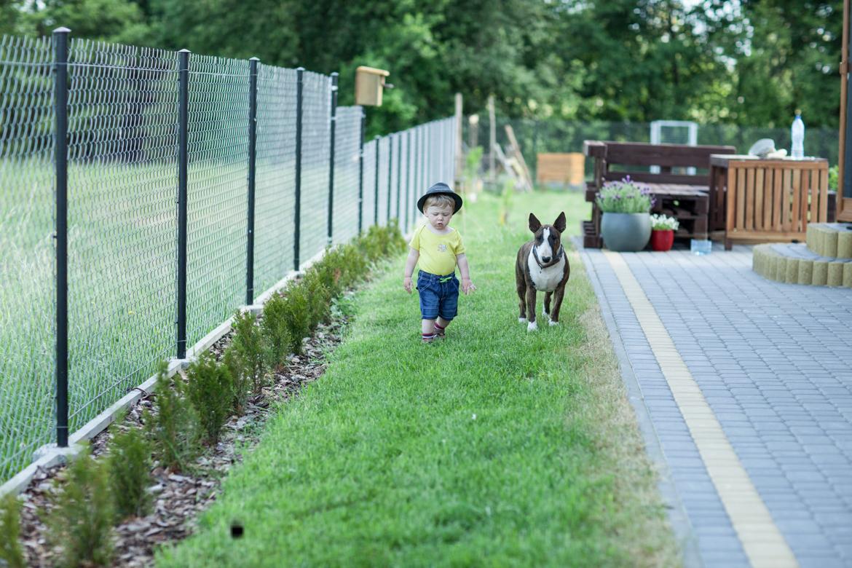 pies-przyjacielem-czlowieka-16