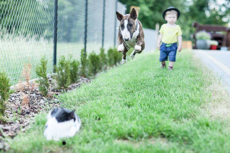 pies-przyjacielem-czlowieka-17
