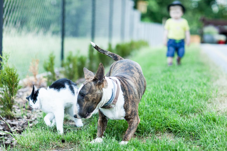 pies-przyjacielem-czlowieka-18